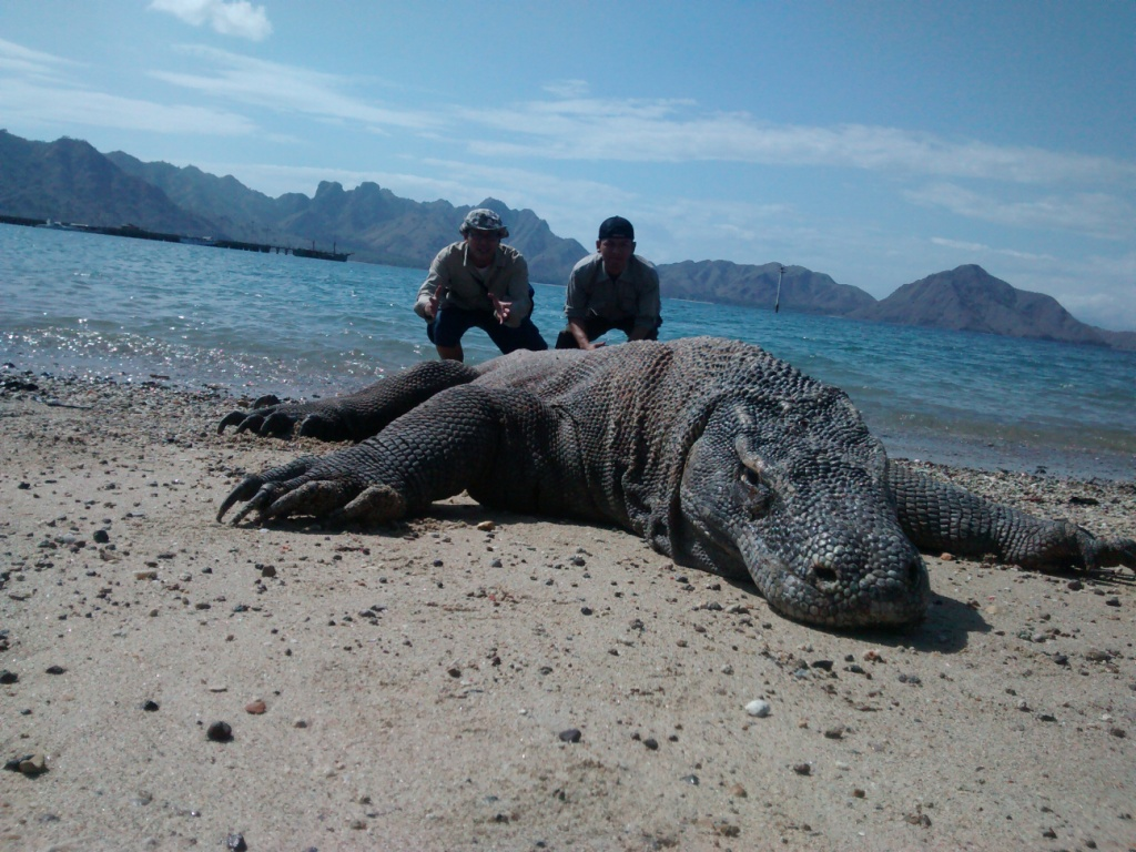 Tour Komodo From Bali