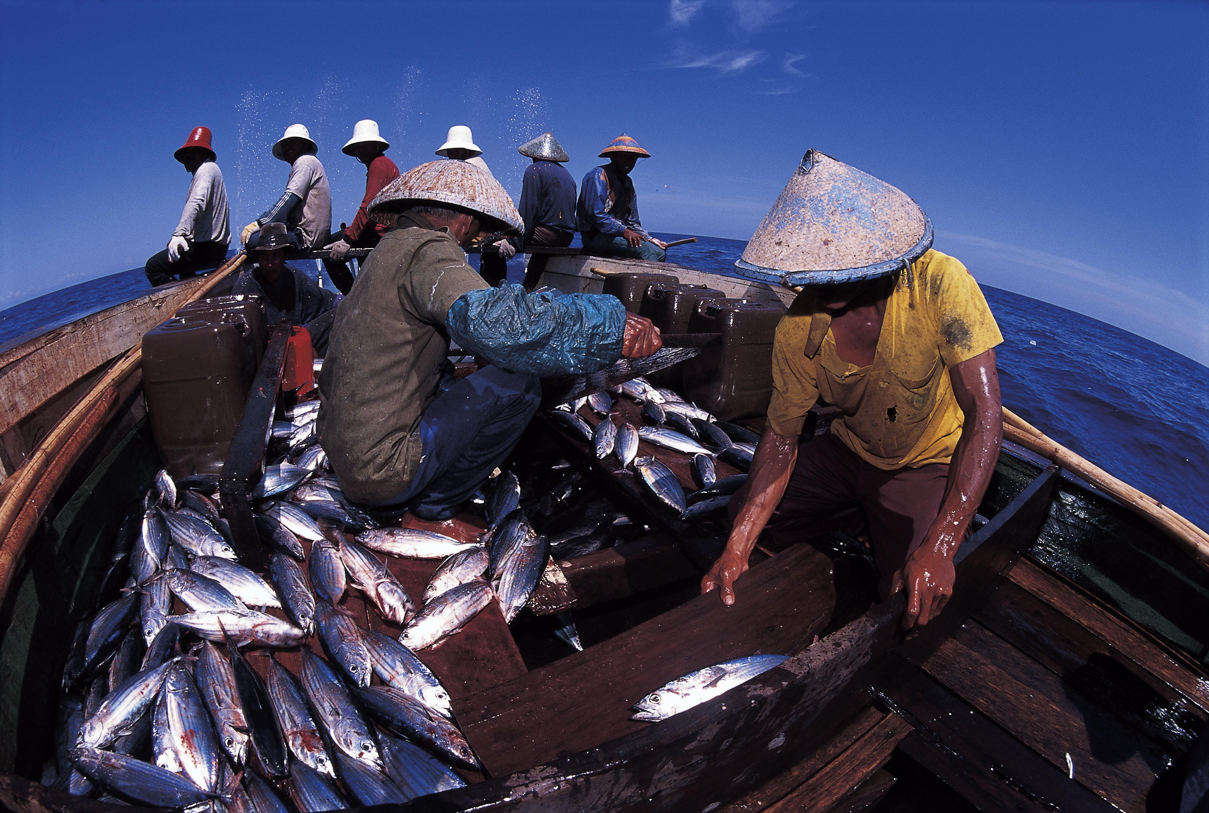 contoh gambar ilustrasi nelayan hilustrasi
