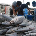 Akibat Kebijakan KKP, Industri Pengolahan Ikan di Bitung Kesulitan
