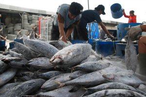 Industri perikanan di Bitung. (Foto: Sulawesi Bisnis.com)