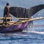 Jelang Hari HAM 10 Desember 2016, Nelayan Masyarakat Adat Lamalera ini Justru Dikriminalisasi