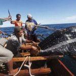 Selamatkan Budaya Bahari Nusantara, Nelayan Adat Lamalera yang Dikriminalisasi harus Dibebaskan