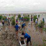 Sehatkan Ekologi Pantai, KIARA dan P3UW Tanam 500 Bibit Pohon Mangrove