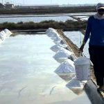 Terkait Penangkapan Dirut PT Garam, KNTI desak Perbaikan Tata Kelola Garam Nasional