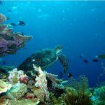 Dongkrak Wisata Bahari, Menpar luncurkan Buku Taman Laut Indonesia