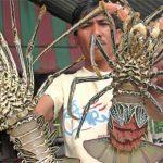 Akibat Kebijakan Susi, Nelayan Lobster NTB kian Merana