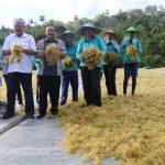Benahi Tata Niaga Niaga, KKP Optimalkan Potensi Produksi Rumput Laut Sumba Timur