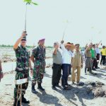 Sambut HUT TNI AL Ke-72, Lantamal I Belawan Tanam Dua Ribu Bibit Pohon Mangrove