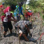 Sambut HUT TNI, Lanal Batuporon Tanam Mangrove