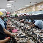 Industri Perikanan Tak Urung Berkembang, Di Tengah Pencurian Ikan Yang Sedang Menurun
