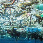 Di Hari Laut Dunia, KIARA Menghimbau Selamatkan Laut dan Ekosistemnya Dari Sampah