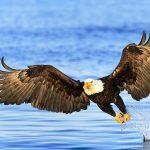 Membahayakan Ekosistem, Walhi Sumut Menghimbau Warga Jangan Tangkap Elang Laut