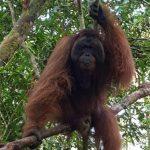 Taman Nasional Tanjung Puting sebagai Bali Baru ke-11