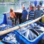 Antisipasi Pelemahan Ekonomi, BUMN dan Swasta Siap Hasil Tangkapan Ikan Nelayan