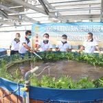 Perkuat Ketahananan Pangan Nasional, Seskoal Gerakan Budidaya Ikan Air Tawar